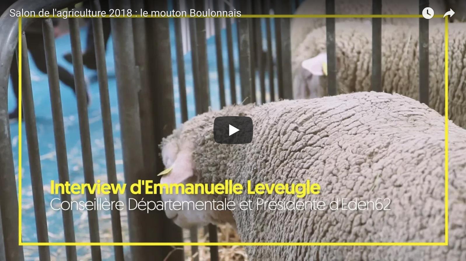 video-youtube-mouton-boulonnais